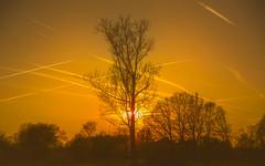 Sunset-6858 (EB_Creation) Tags: orange sun intothesun lens nikon sigma
