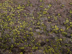 "lichen • <a style=""font-size:0.8em;"" href=""http://www.flickr.com/photos/44919156@N00/33694127866/"" target=""_blank"">View on Flickr</a>"