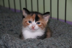 298/365/3220 (April 5, 2017) - It's Kitten Season! Cats and Kittens at Crafty Cat Rescue (Ann Arbor, Michigan) - Wednesday April 5, 2017 (cseeman) Tags: cats pets craftycatrescue annarbor michigan shelter adoption catshelter catrescue caring animals craftycatphotos04052017 kittens 2017project365coreys yearnineproject365coreys project365 p365cs042017 356project2017