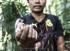 Ant (Jessica Guindo) Tags: ant jungle sumatra perfect photo photography indonesia world mundo hormigas