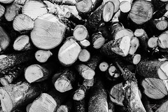 Multiage (Rkitichai) Tags: multiage wood log firewood stack grain growth rings rounded shape trees blackandwhite monochrome nature naturephotography sticks polkadots