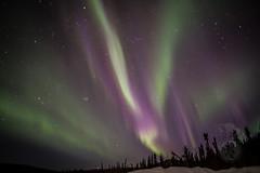 Purple lights (Storm'sEndPhoto) Tags: 2017 anselsiegenthaler stormsendphotography stormsendphoto alaska aurora auroraborealist fairbanks foxfire goldstream interior kevät march murphydomerd night nightsky nikon nikonphotography nordlicht northernlights revontulet spring winter visipix