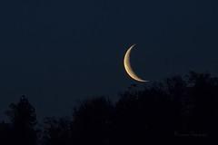Moonrise (iLaura_) Tags: moonrise moon trees luna alberi cielo