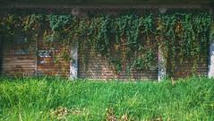 Green Store (JoaoPauloC) Tags: nature green door abandoned rio plant