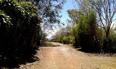 Camino al sol/ Road under the sun (vantcj1) Tags: paisaje camino rural vegetación árboles caminata bambú cielo nubes plantación soledad verde
