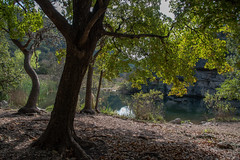 Pond - Lost Maples State Natural Area - Bandera County - Texas - 13 November 2016 (goatlockerguns) Tags: hill country view lost maples state natural area bandera county texas usa unitedstatesofamerica south southern southwest nature park hills hillcountry