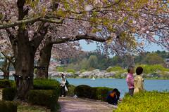 Under the tree 木の下 (Shutter Chimp: Im back!) Tags: japan 日本 湖 lake people 人 桜 sakura blossom cherry mito いばらき 茨城 水戸 ibaraki 千波湖 senba