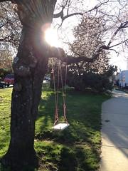 (colorinspirit) Tags: britishcolumbia urbanphotography springair childhood sungazing kitsilano cherrytree blossom magiclight goldenhour sunshine rays swing treeswing joy
