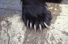 ZOO0628 (Akira Uchiyama) Tags: 動物たちのいろいろ 手 手ヒグマ