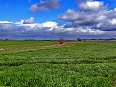 Landschaft (Wunderlich, Olga) Tags: wasser grün baum landschaft natur himmel wolken ladscape rügen insel deu mecklenburgvorpommern spuren