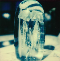 Blue Siamese - new beta /600 3.0 (marion (milky soldier)) Tags: analoguelove analogue impossible roidweek2017 roidweek beta30 sx70 polaroidweek2017 polaroidweek siamesetwins bluefilter jellyfish medusa blue