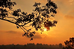 above the city (Ruby Ferreira ®) Tags: pôrdosol sunset branches galhos silhuetas silhouettes city cidade prédios buildings