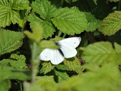 Butterfly (deannewildsmith) Tags: earthnaturelife staffordshire chasewater butterfly insect