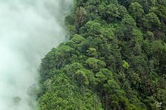 Sierra Madre de Chiapas (Jorge De Silva R) Tags: chiapasmexico jorgesilva reserva de la biosfera el triunfo nature legado verde foto aérea sierra madre chiapas