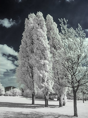 Mountsfield Park (blackwoodse6) Tags: canon infrared 720nm ir trees blue park catford canong10 london england southlondon mountsfieldpark southeastlondon londonparks outdoors