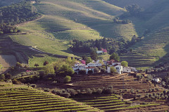 Douro Vineyards (ferreira.ajbf) Tags: douro vineyards mountains portwine wine port portugal nature light shadow green pink color rural landscape sunlight