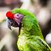 Birds @ Xcaret Park Mexico