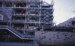 (sharpglow) Tags: disposable camera paris pigeons