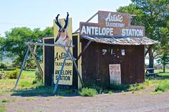 Artistic Taxidermy, Hampton, OR (Robby Virus) Tags: hampton oregon or artistic taxidermy antelope station high desert august season outpost