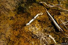 Sulphur (smellerbee) Tags: rotorua nz newzealand travel road roadtrip northisland sticks white orange sulphur sulfur twigs ground steamy pentax pentaxkr nature decay
