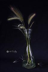 Proyecto 116/365 (Art.Mary) Tags: espigas cristal glass verre bodegón stilllife proyecto365 naturemorte canon spikes épis jarrón