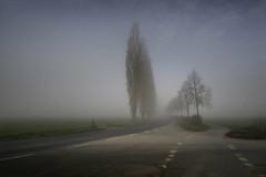 Visual Range II (clé manuel) Tags: fog mist road baiersdorf nebel nature landscape trees alley allee natur strase landstrase countryside sony alpha a6000 6000 samyang 12mm f2