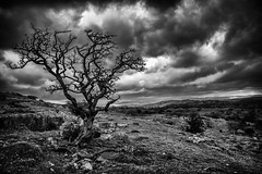 Lone Tree on Hampsfell (Nick Thorne, Bodian Photography) Tags: 2017 blackwhite bybodianphotography bynickthorne cartmelpeninsula cumbria england flora geographicalfeatures grangeoversands hampsfell hawthorn limestonepavement location moody photographer silhouette themed year tree
