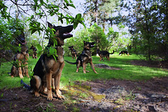Pippin (Ryan Arneson) Tags: park dog nature puppy outdoors photography friend shepherd canine best multiplicity mans german trick clone companion copy duplicate multiplication multiply