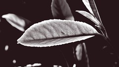 Leaf (Zemiorka) Tags: summer plants sun tree nature leaves leaf feuilles