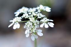 Wild Plants, Jalaad (Ma3eN) Tags: wild plant jordan jalaad