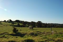 Milton, Corks Lane, Shoalhaven, NSW Australia (John Panneman Photography) Tags: d50 nikon australia nsw milton corkslane