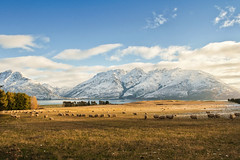 Late afternoon at Lake Wakatipu (bhawi) Tags: light newzealand sky snow mountains clouds landscape golden sheep snowcapped southisland queenstown grazing lakewakatipu afternnon southernscenicroute