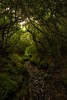 Follow me on an adventure! (Frank Kehren) Tags: forest canon f10 rhododendron 24 greatsmokymountainsnationalpark brushymountain canoneos5dmarkii tse24mmf35lii canontse240mmf35lii