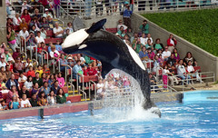 SeaWorld (Tejas Cowboy) Tags: park people water san 1993 killer theme whale orca antonio seaworld 1990s 90s