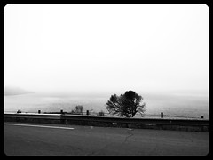 Something (BriannaBAMF) Tags: ocean sanfrancisco california trees blackandwhite nature fog gorgeous despair bnw distant orcafilter
