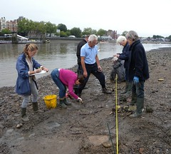 Recording the wattle structure (Thames Discovery Programme) Tags: london archaeology thames river community fulhampalace thamesdiscoveryprogramme fhm07