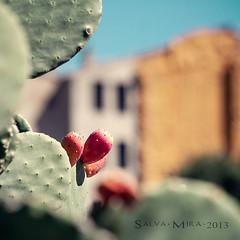 [ #27 :: 2013 ] (Salva Mira) Tags: cactus alcoi salva higochumbo figadepala salvamira salvadormira