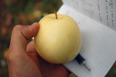 "Yellow Transparent Apple <a style=""margin-left:10px; font-size:0.8em;"" href=""http://www.flickr.com/photos/91915217@N00/10303089073/"" target=""_blank"">@flickr</a>"