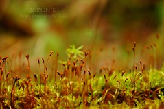 sprouts (NJEphotography) Tags: autumn macro green fall nature photography evans moss amazing october bokeh wildlife growth sprouts mossy 2013