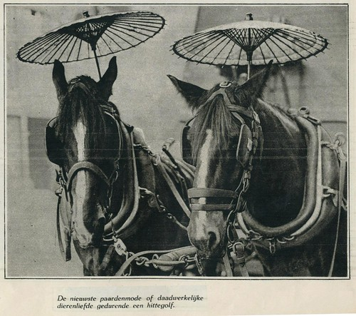 paardenmode hittegolf 1930