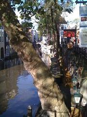 cat (indigo_jones) Tags: signs holland tree water netherlands architecture cat canal kat utrecht nederland boom climbing oudegracht gebouwen