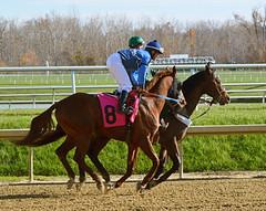 2012-11-16 (119) r3 Carlos Marquez Jr on #8 Slide Bet (JLeeFleenor) Tags: photos photography marylandracing md marylandhorseracing jockey   jinete  dokej jocheu  jquei okej kilparatsastaja rennreiter fantino    jokey ngi horses thoroughbreds equine equestrian cheval cavalo cavallo cavall caballo pferd paard perd hevonen hest hestur cal kon konj beygir capall ceffyl cuddy yarraman faras alogo soos kuda uma pfeerd koin    hst     ko  maryland