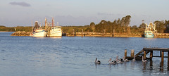 Late afternoon in Yamba (Graham Cook) Tags: pelicans fishing jetty newsouthwales trawler lateafternoon yamba