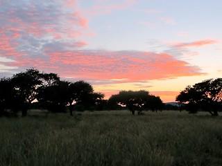 Namibia Safari - Lake Lodge 20