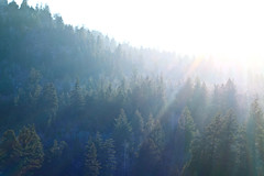 Shine (The Noisy Plume) Tags: november autumn light fall forest afternoon shine caribounationalforest