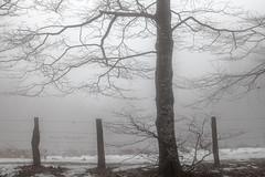 Serie nieblas; El encuentro (atvjavi) Tags: snow nieve navarre navarra nafarroa nieblas urkiaga quintoreal atvjavi altpurkiaga