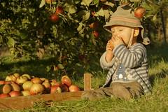 Jureks Apfelernte18 (morak faxe) Tags: tree rot apple nature deutschland countryside child eating natur harvest meadow wiese kind land grn brandenburg baum apfel uckermark ernte schorfheide
