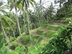 INDONESIA (PINOY PHOTOGRAPHER) Tags: world travel bali color beautiful canon wonderful indonesia photography amazing asia tour rice image pov terraces picture tourist spots fabulous attraction