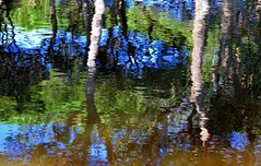 what is it ? (miriam ulivi) Tags: toscana lagodimassaciuccoli acqua riflessi water reflections alberi trees colors nature lac nikond3200 ringexcellence dblringexcellence