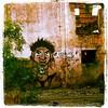 O tempo passa... (Coró AgaVe) Tags: square graffiti squareformat urbana trem tempo estação abandono lordkelvin guerrilha iphoneography instagramapp uploaded:by=instagram coroagave
